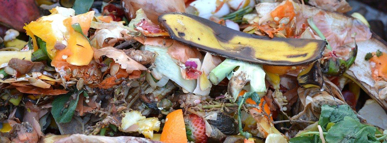 compost déchets